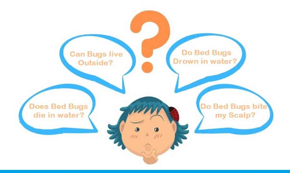 Do bed bugs drown?