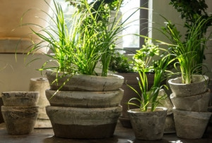 Steam Clean artificial Dusty Plants and their leaves Instantly with Steam Cleaners